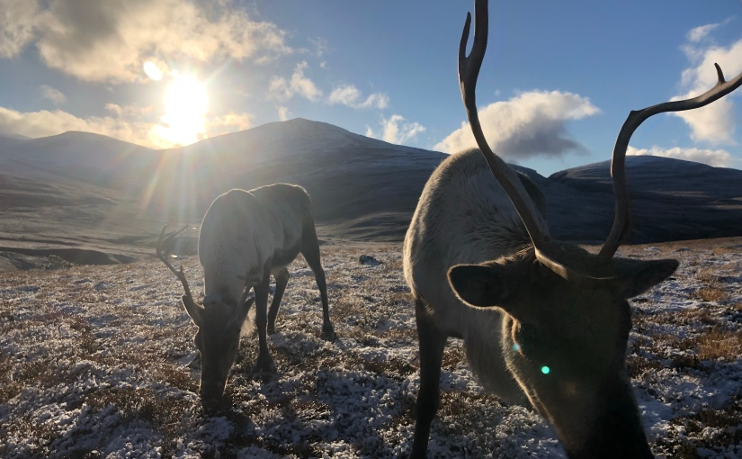 The Mysterious Life of an American Reindeer Herder